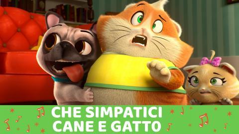 Canzone Che Simpatici Cane E Gatto Musica 44 Gatti